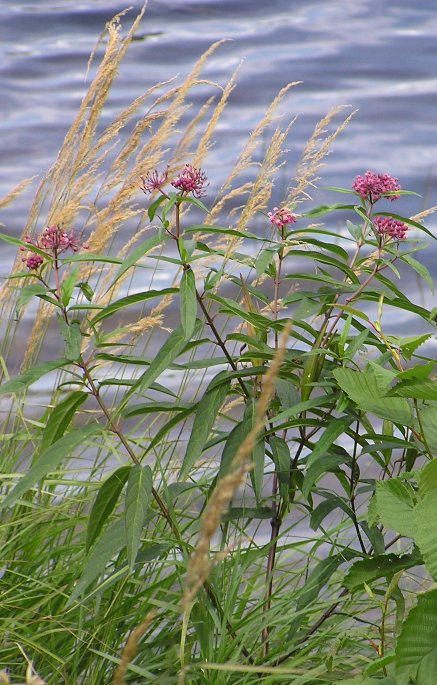 Plant Life at Seney NWR