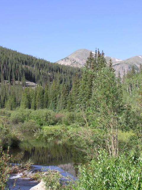 beaver pond trout stream