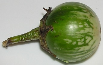 fresh greenbrinjal