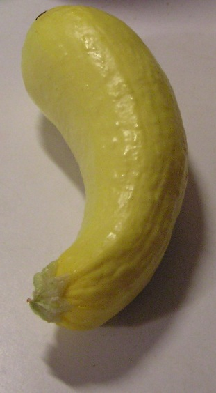 yellow squash, aka summer or crookneck squash