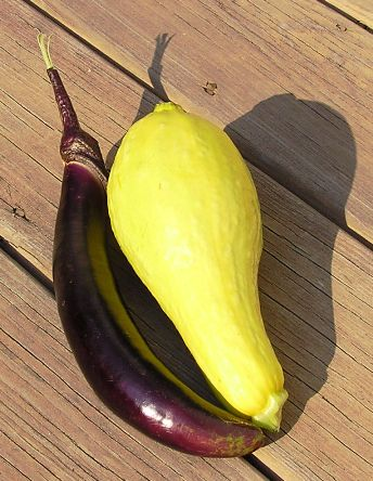 brinjal (ichiban) and summer squash