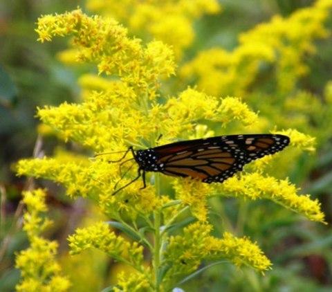 monarch on northern lake huron