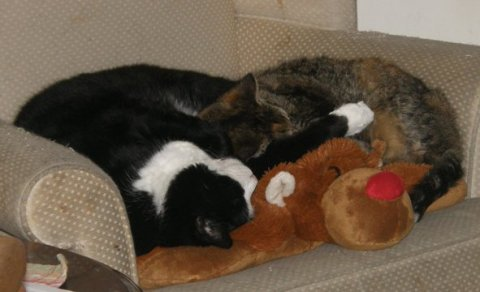 pillow pet kitties