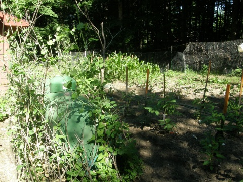 the little garden in the north woods