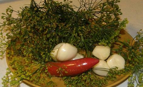 dill, garlic and chiles for pickles