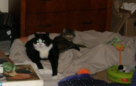 kitties at the hometel jan of 13