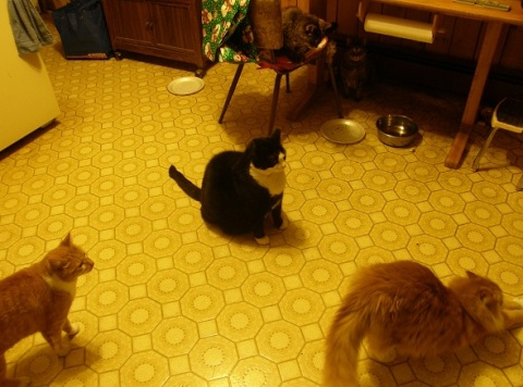 xmas eve kitty buffet