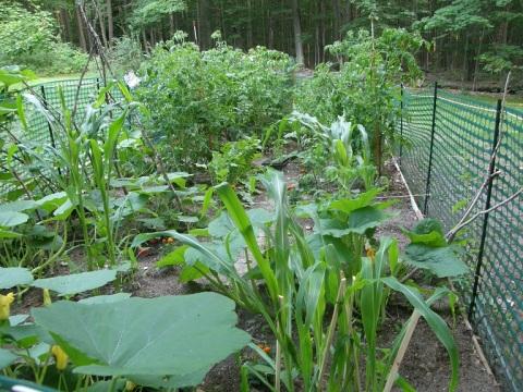 little garden in the north woods