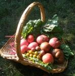 harvest 8.18.16