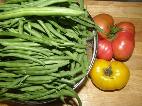 kentucky blue pole beans and tomatoes
