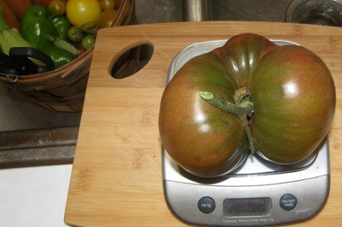 giant cherokee purple tomato