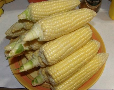 sweet corn, var. bodacious
