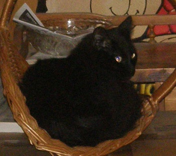 moolie-cat-in-a-basket